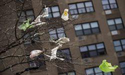 New York chính thức áp dụng luật cấm túi nilon